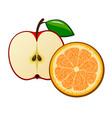 drawn ripe orange and apple vector image