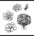 hand drawn set gardenia flowers in a pot vector image vector image
