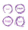 watercolor or aquarelle paintings of lavender vector image vector image