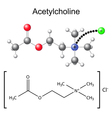 Chemical formula and model of acetylcholine vector image vector image