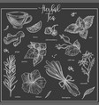 herbs chalk sketch icons for herbal tea cafeteria vector image vector image