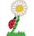 ladybird climbing on the flower vector image