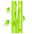 stems of bamboo in simple style on white vector image vector image