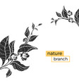 template nature branch vector image vector image