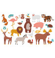 cute animals wood farm and jungle animals fox vector image