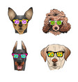 Dog wearing sunglasses year of the dog 2018