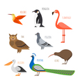 set of Colorful bird icons Owl hummingbird pigeon vector image vector image