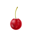Single Realistic Cherry Isolated on White vector image vector image