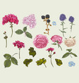 vintage floral set of natural elements vector image