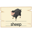 wordcard template for word sheep vector image