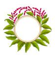 amaranth plant frame on white background
