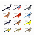 set of Colorful bird icons Cardinal magpie sparrow vector image vector image