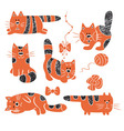 Striped cats vector image