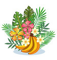 tropical garden with banana cluster vector image vector image