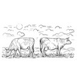 two cows that graze in meadow design element vector image
