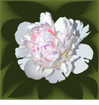 White realistic paeonia flower vector image