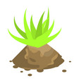 aloe vera plant icon isometric style vector image vector image