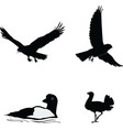 birds of the world vector image vector image