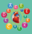 heart and vitamins vector image