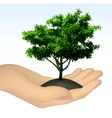 Human hand with tree vector image