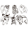 colorful set of of dogs of different vector image vector image