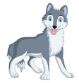 cute wolf cartoon on white background vector image vector image