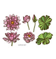collection of hand drawn colored lotus vector image vector image