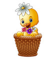 cute baby duck inside a wicker basket with colorfu vector image vector image