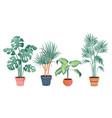 tropical house plants decor vector image vector image