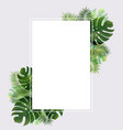 banner with leaf palm vector image vector image