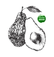 Hand drawn avocado vector image vector image