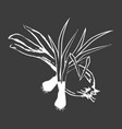 leek bunches and bulb onion isolated white outline vector image vector image