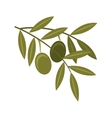 olive seeds plant icon vector image vector image