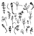 Set of ink drawing herbs and leaves vector image vector image