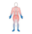 human muscles cold vector image vector image