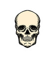 human skull in vintage style design element for vector image vector image