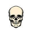 human skull in vintage style design element vector image vector image