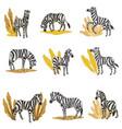 zebras eating plants wildlife in savannah vector image vector image