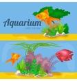 Aquarium fish seaweed underwater banner template vector image vector image