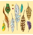 feathers for you vector image vector image