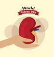 hand holding kidney day awareness health vector image