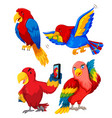set of parrot character vector image