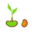 plant growing from seed start of new life concept vector image
