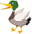 cute duck white background vector image