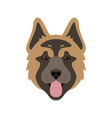 muzzle of american akita dog vector image
