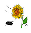sunflower flower drawing hand drawn vector image