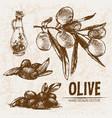 digital detailed line art olive vector image vector image