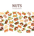 nuts collection poster flat cartoon banner vector image vector image