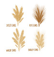 cereal set barley wheat rye isolated on white vector image