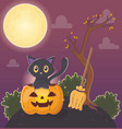 cute cat pumpkin and broom halloween vector image vector image